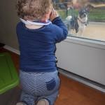 Wordless Wednesday: Little Boy Blue