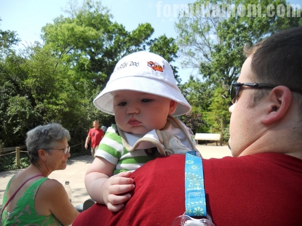 Family Field Trip: Head to your local zoo!