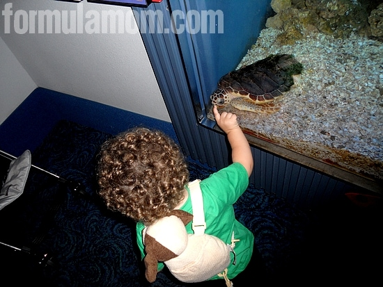 Things to Do in Galveston with Kids - Moody Gardens
