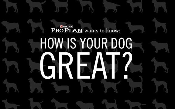 Purina Pro Plan My Dog is Great