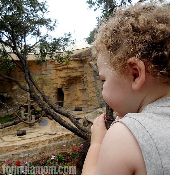 San Antonio Zoo Local Travel