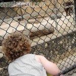 Visit the San Antonio Zoo