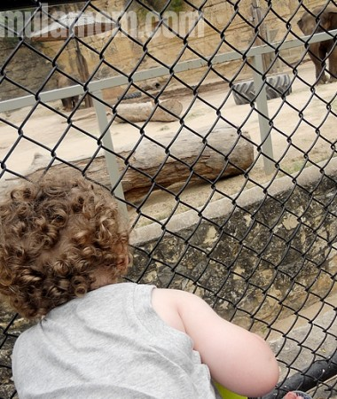 Visit the San Antonio Zoo