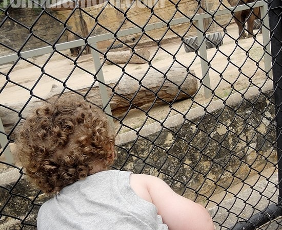 San Antonio Zoo Makes a Great Day of Affordable Family Fun