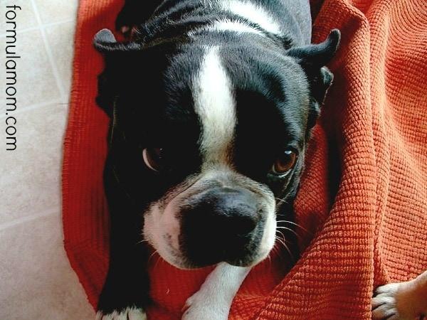 Dog Dental Care Treats
