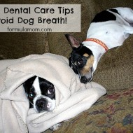 Dog Oral Care Tips to Help Avoid Dog Breath