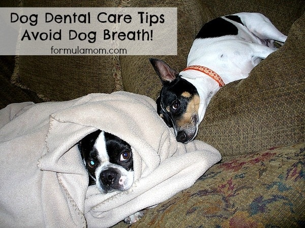 Dog Dental Care Tips