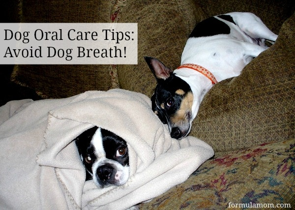 Dog Oral Care Tips
