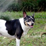 Purina® Pet Park is Fun for this Pet Owner