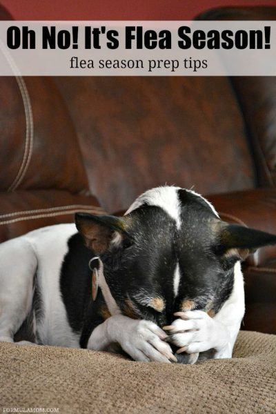 Check out these flea season prep tips so that you don't have to be infested this year! Your dog will thank you!