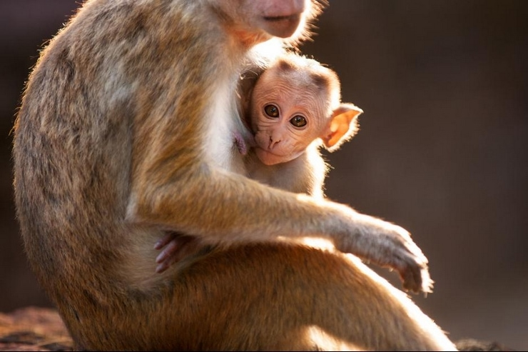 Meet the family of Disneynature's Monkey Kingdom #Disney #MonkeyKingdom