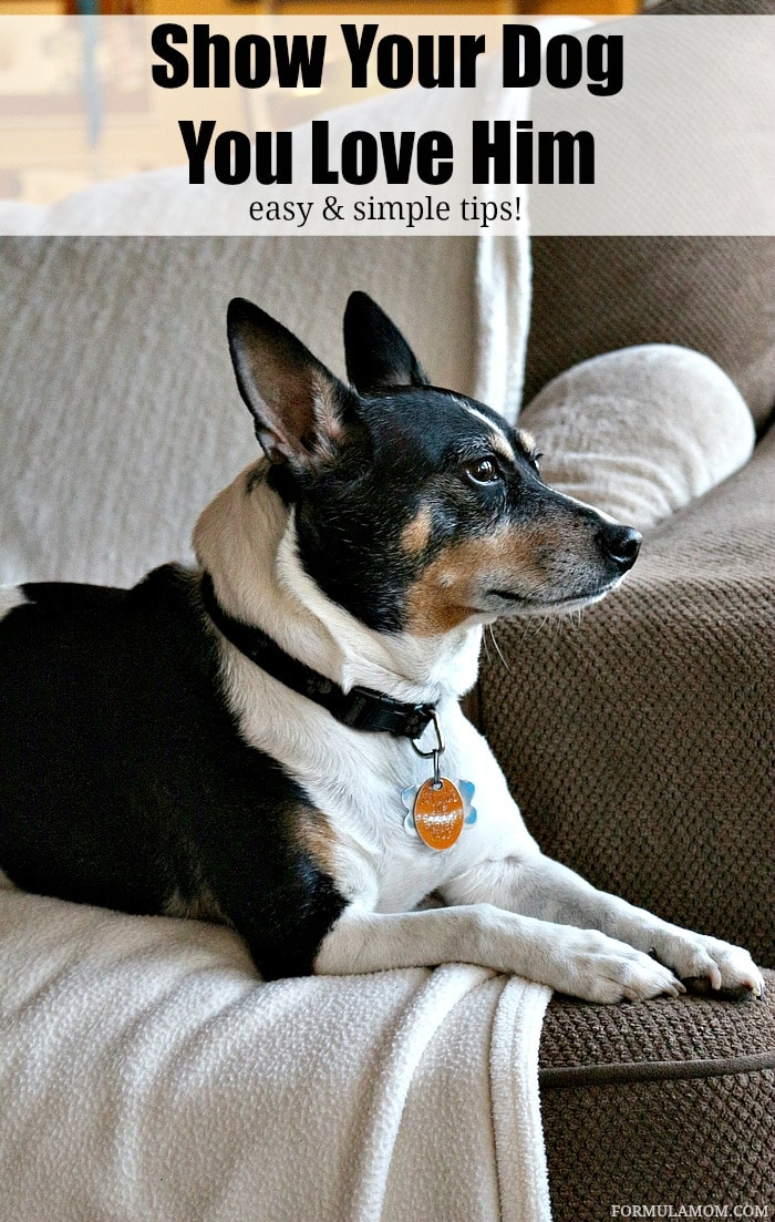 Check out these 5 Easy Ways to Show Your Dog You Love Him!  #CesarHomeDelights