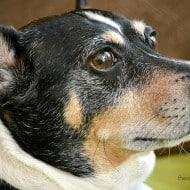 Find out your dog's ancestry with canine DNA testing!!!