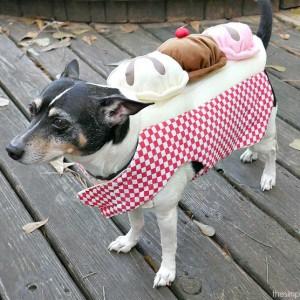 60+ Dog Halloween Costumes on Amazon
