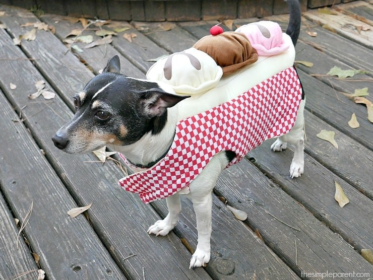 Dog Halloween costumes are serious business! Every year is a mission to find the cutest dog halloween costumes! Check out some of the options available on Amazon!