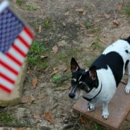 I salute Purina and the Dogs On Deployment program. Yip, Yip, Hurray!