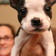 Your Dog Says Buy Purina Treats on Black Friday!