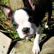 5 Musts for a Pet Safe Backyard