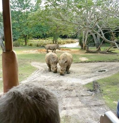 Check out some of the best Animal Kingdom attractions to check out with your family when you visit Walt Disney World!