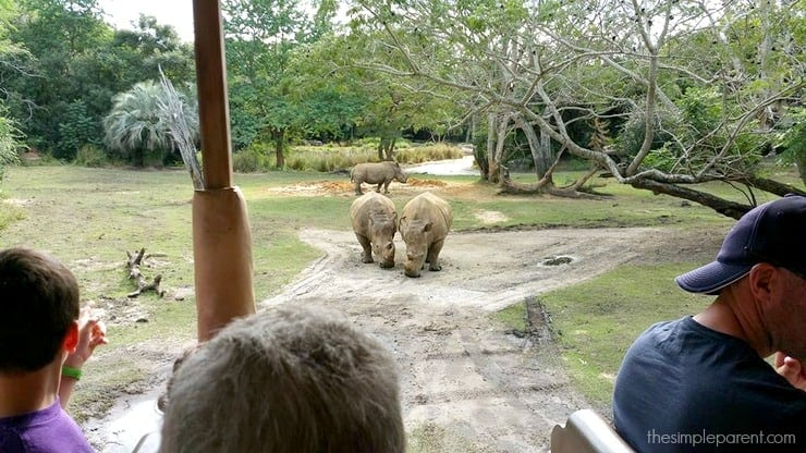5 Best Animal Kingdom Attractions for the Family