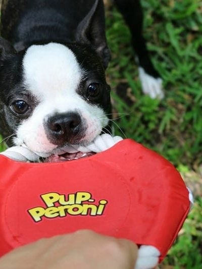 Check out these fun things to do with your dog this summer!
