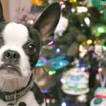 Tips for Taking Great Holiday Pet Photos