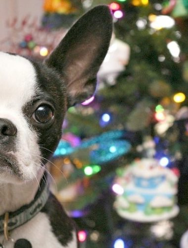 Check out these tips for taking great holiday pet photos!