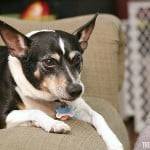 The Importance of Picking a Family Dog & A Dog's Purpose