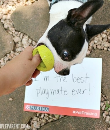 Celebrate National Pet Month with Pet Praising Photos