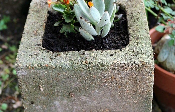 Build Cinder Block Gardens to Make the Yard Look Amazing
