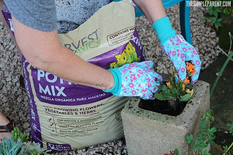 Learn how to build cinder block gardens together with your family!
