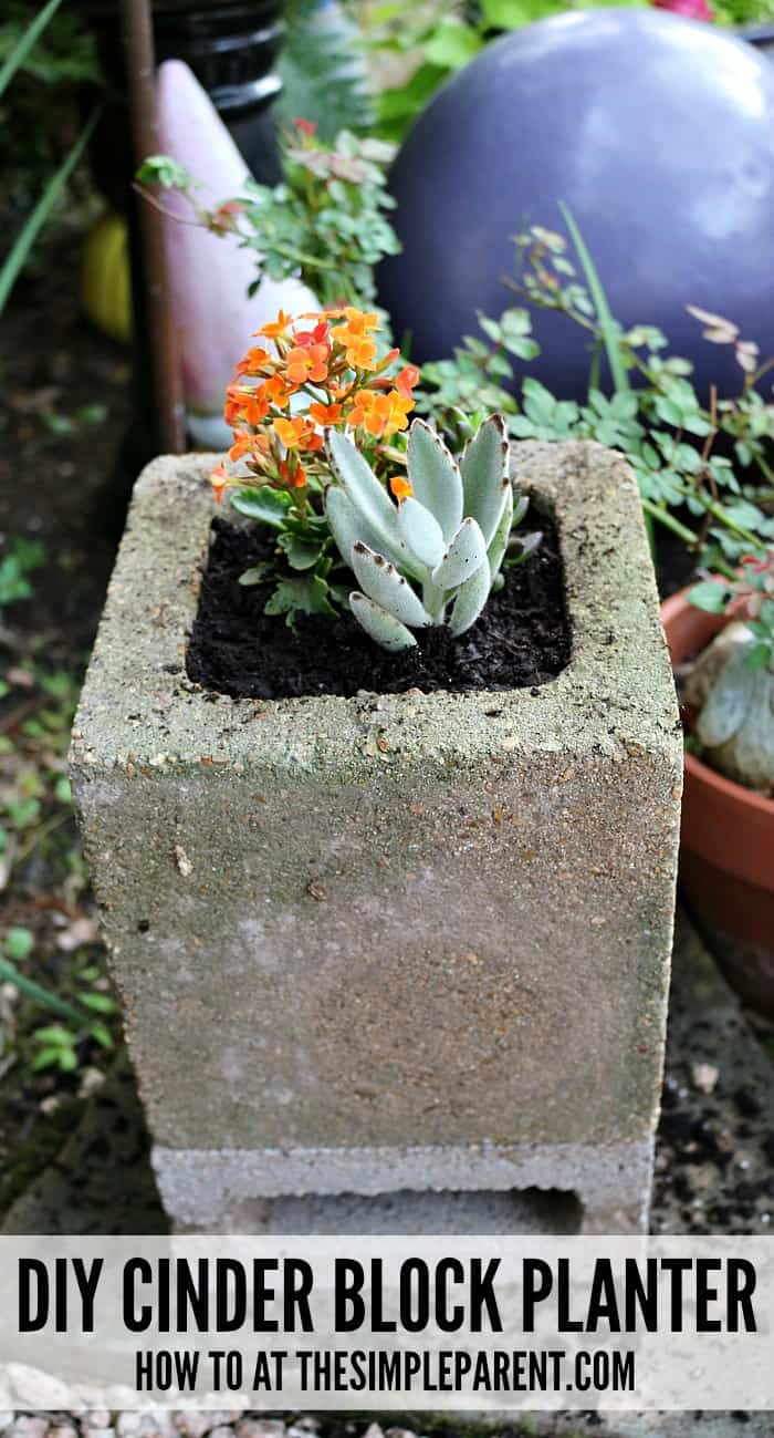 Learn how easy it is to build cinder block gardens!
