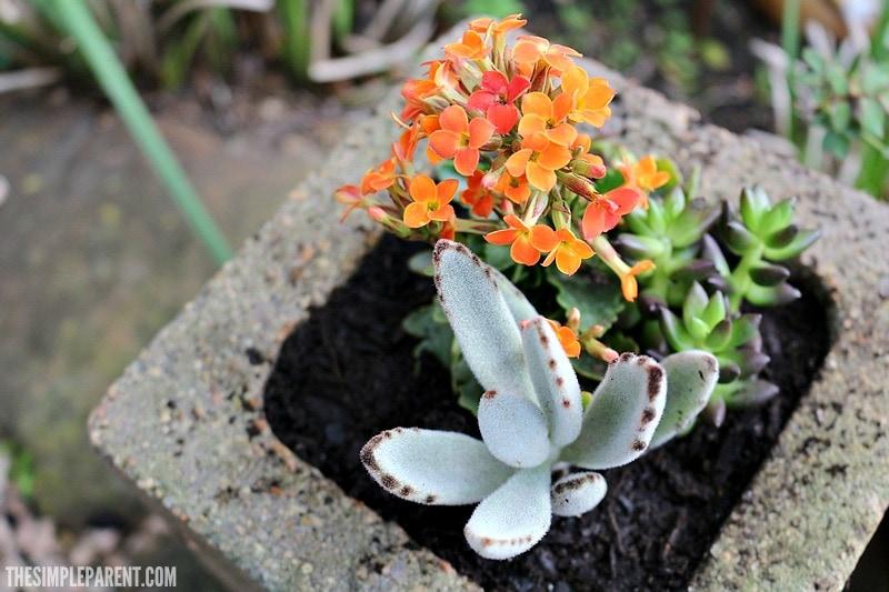 cinder-block-garden-beds-succulent