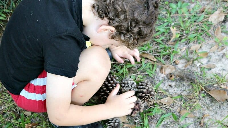 4 Nature Activities for Kids That Can Be Done as a Family