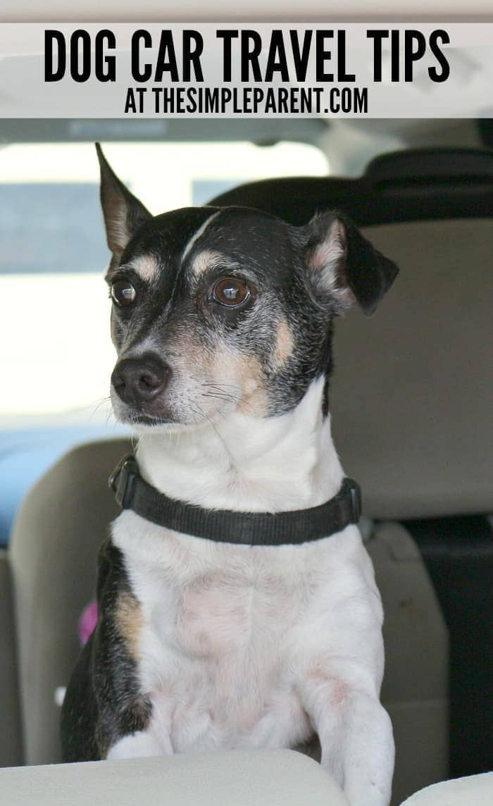 Get prepared with these easy dog car travel tips!