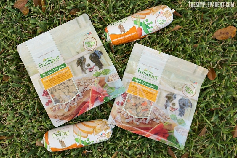 Is your dog a picky eater? Check out our dog feeding guide with tips to get your pup to eat!