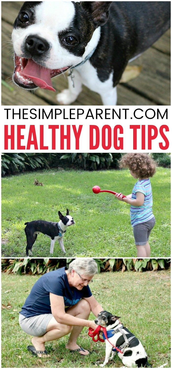 Healthy Dogs Tips - Learn how to keep dogs healthy and happy this year! From the food, treats, and other pet care, you can keep your dog happy and in the best shape!