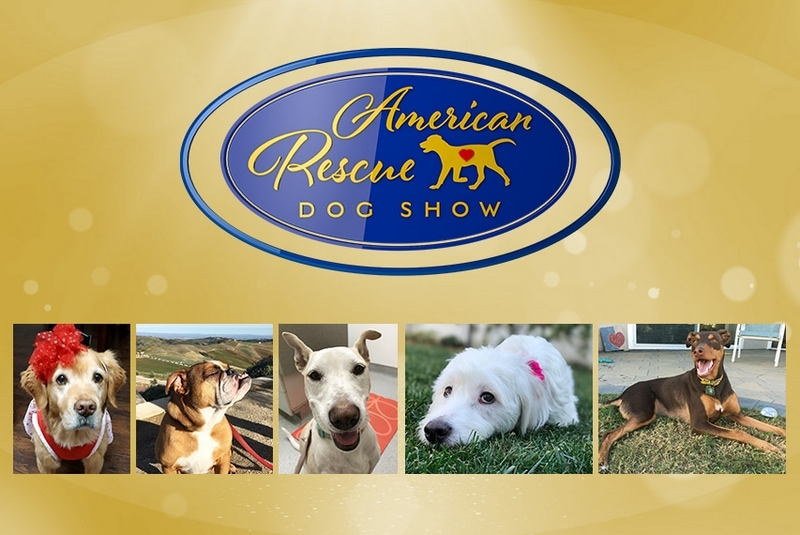 Watch the first-ever 2018 American Rescue Dog Show February 19th at 8pm/7c exclusively on Hallmark Channel! See which of the adorable dogs are going to take home the win in some fun categories!