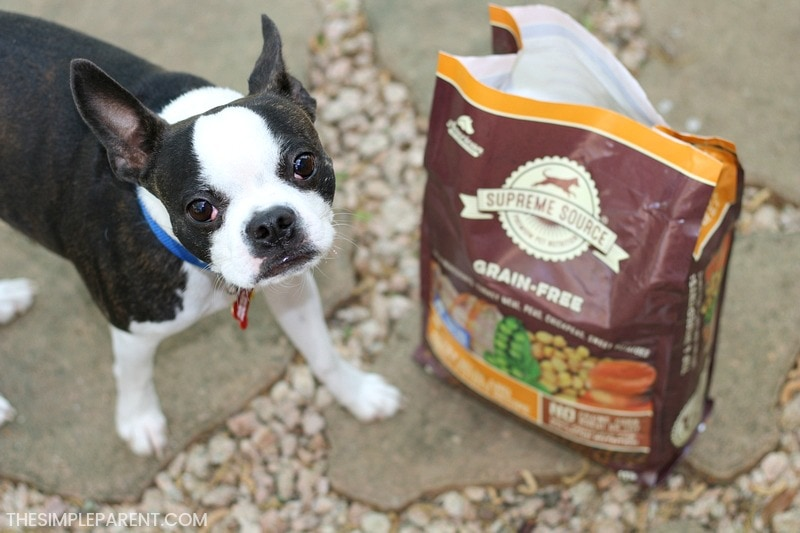 Dog and new food brand after owner learned how to change dog food.