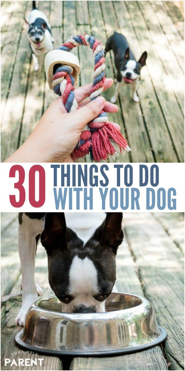 30+ Fun Things to Do with Your Dog - Check out these easy ideas for families with dogs. If you have children, there are some fun ways for them to all play, get some exercise and have fun either at home or out and about!