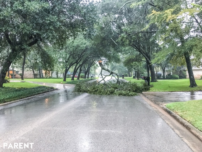 Fallen tree during Hurricane Harvey