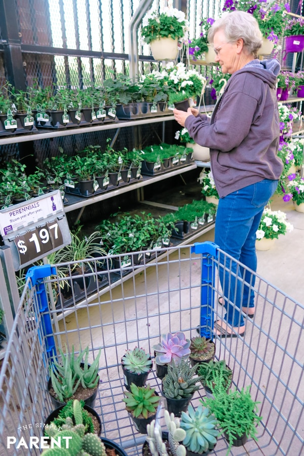Grandmother shopping for plants