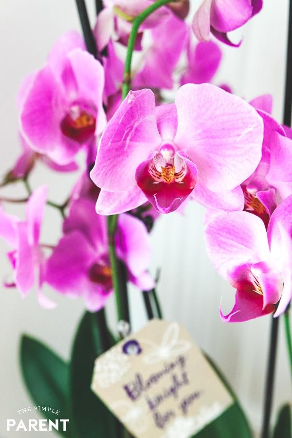 Hallmark Flowers Orchid