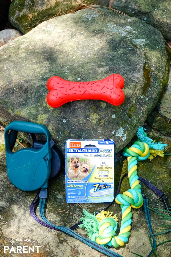 New toys, flea protection, and good dog leashes