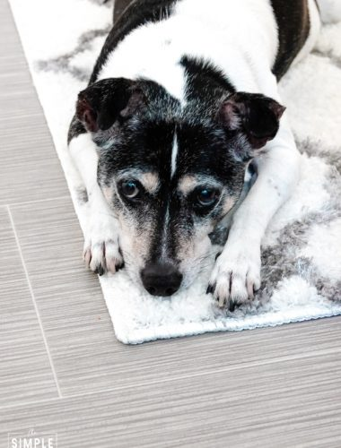 Dog laying on throw rug on top of gray Lifeproof Sheet Vinyl flooring