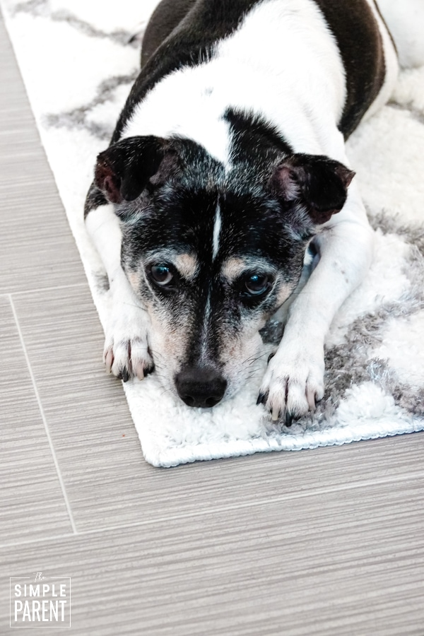 Dog laying on throw rug on top of gray Lifeproof Sheet Vinyl flooring