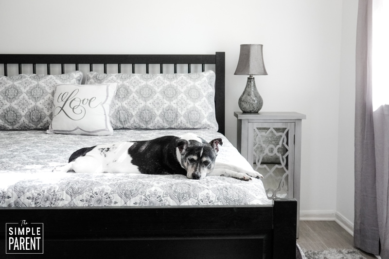 Dog laying on a king sized bed