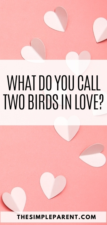 Valentine's joke about birds