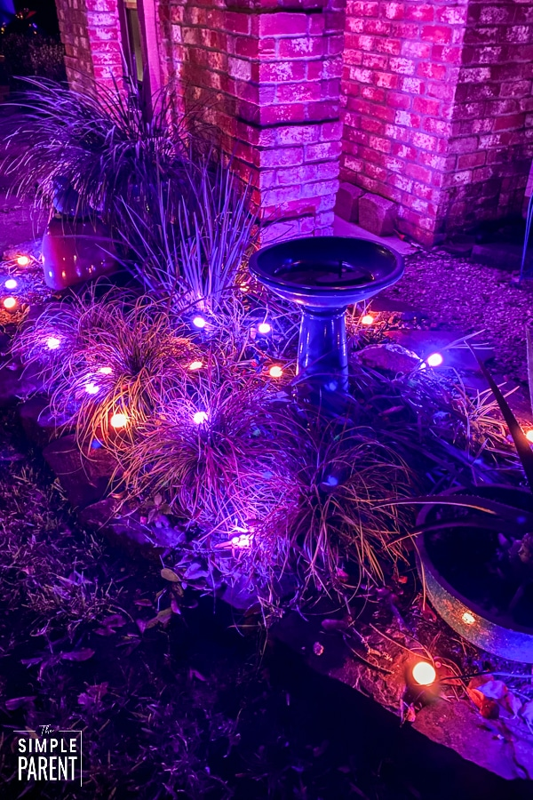 Enbrighten Landscape Lights in purple and orange